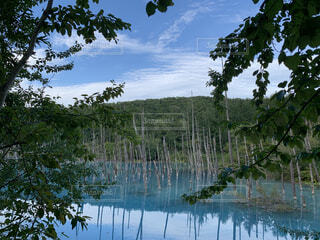 北海道の幻想的な湖の写真・画像素材[4926589]