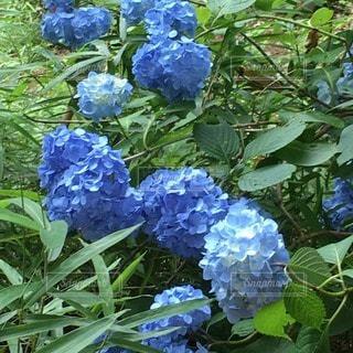花の写真・画像素材[78607]