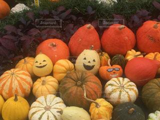 秋の写真・画像素材[241732]