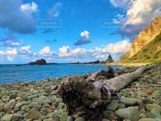 岩の多い浜辺に立つ羊の群れの写真・画像素材[4931834]