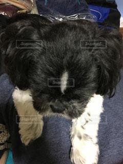 犬の写真・画像素材[224739]
