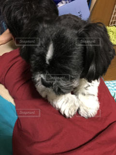 犬の写真・画像素材[224742]