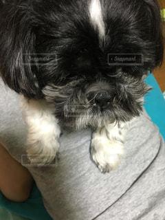 犬の写真・画像素材[224743]
