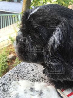 犬の写真・画像素材[224747]