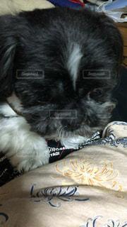 犬の写真・画像素材[224756]
