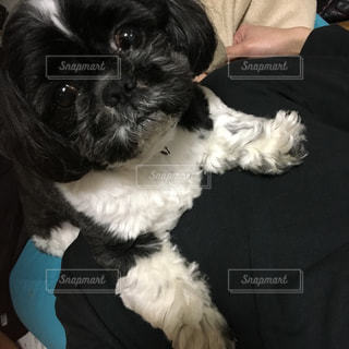 犬の写真・画像素材[224760]
