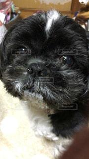 犬の写真・画像素材[224761]