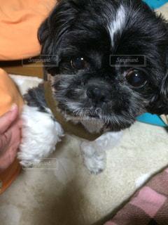 犬の写真・画像素材[247240]