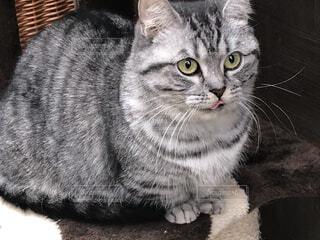 猫のクローズアップの写真・画像素材[4932255]