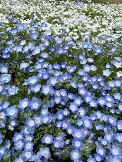 花の写真・画像素材[4932266]