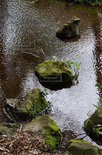 小さな池の写真・画像素材[316806]