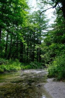 森の中の木の写真・画像素材[4942718]