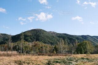 背景に山のある木の写真・画像素材[4952836]