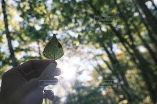 木を持つ手の写真・画像素材[4952830]