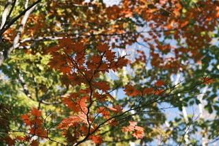 木の上に座っている鳥の写真・画像素材[4952833]