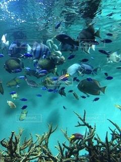 今日も泳ぐ魚たちの写真・画像素材[4941911]