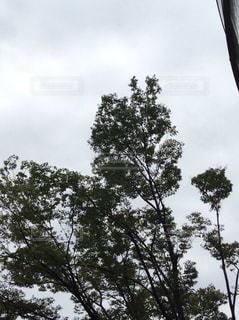 空の写真・画像素材[230458]