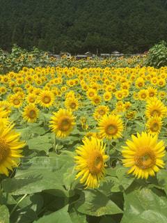 花畑 - No.224127