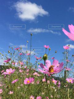自然の写真・画像素材[234990]