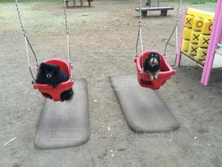 犬の写真・画像素材[224226]