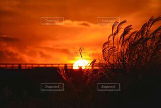 秋の夕陽の写真・画像素材[4950759]
