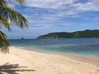 海の隣の砂浜にあるヤシの木のグループの写真・画像素材[4942108]