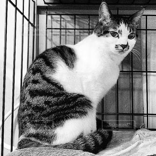 猫の写真・画像素材[224390]