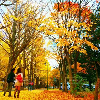 秋の写真・画像素材[224399]