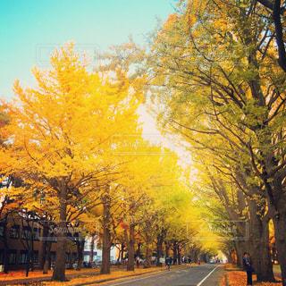 秋の写真・画像素材[224402]
