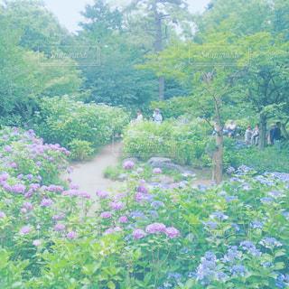 お花畑の写真・画像素材[224404]