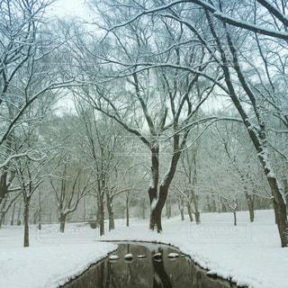 冬の写真・画像素材[224406]