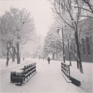 冬の写真・画像素材[224409]
