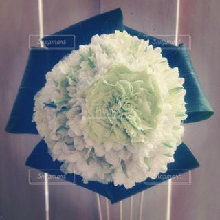 花の写真・画像素材[224791]