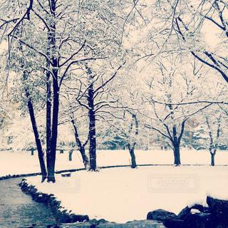 雪の写真・画像素材[368747]