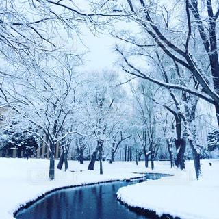 雪の写真・画像素材[368751]