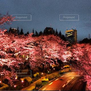 桜の写真・画像素材[413726]
