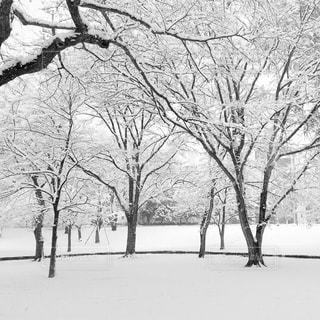 雪の写真・画像素材[430095]