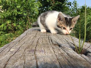 猫の写真・画像素材[224426]
