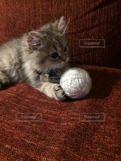 猫の写真・画像素材[224457]