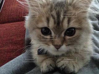 猫の写真・画像素材[224458]