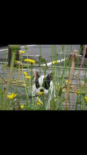 犬の写真・画像素材[224476]