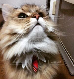 猫の写真・画像素材[292252]