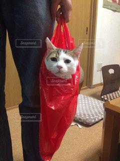猫の写真・画像素材[292254]