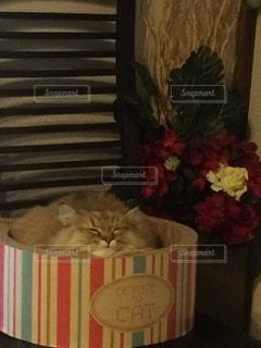 猫の写真・画像素材[292297]