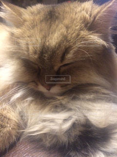 猫の写真・画像素材[314800]