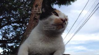 猫が好きの写真・画像素材[235754]