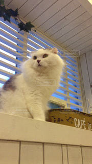 猫が好きの写真・画像素材[235755]
