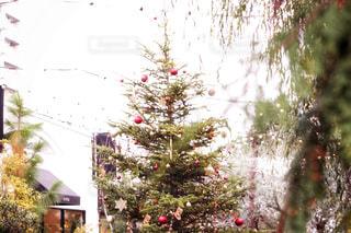 Christmas treeの写真・画像素材[890635]