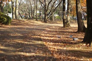 森の中の木の写真・画像素材[902254]