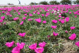 お花畑の写真・画像素材[224635]